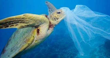 Тайские ученые призывают полностью отказаться от одноразовых пластиковых пакетов.